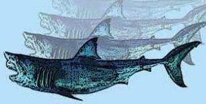 Shark Embalming 101