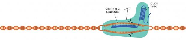 CRISPR1a