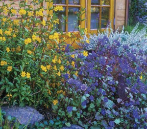 Colorful yellow and purple flowers and plants