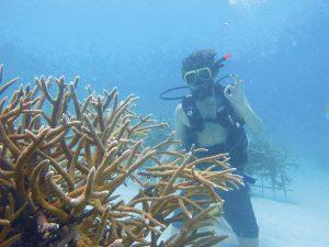 Gator Halpern dives near a Bahamian reef